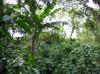 Venta de Terrenos en GUATEMALA, JUTIAPA