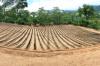 Venta de Fincas en GUATEMALA, COBAN
